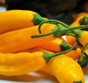 Imagem receita pimenta amarela em conserva